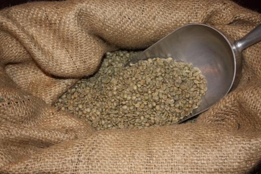 Kaffeesorten » Arabica und Robusta vorgestellt